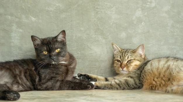 部屋に横になっている濃い灰色と縞模様の猫。
