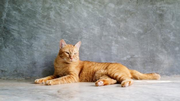 灰色の背景の上に座っている赤い猫。