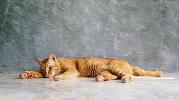 灰色の背景で寝ている赤い猫。