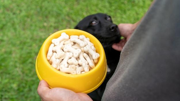 かわいい黒犬が男から餌を待っています。