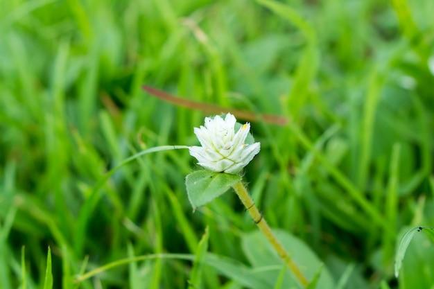 黒クモの巣と白い花