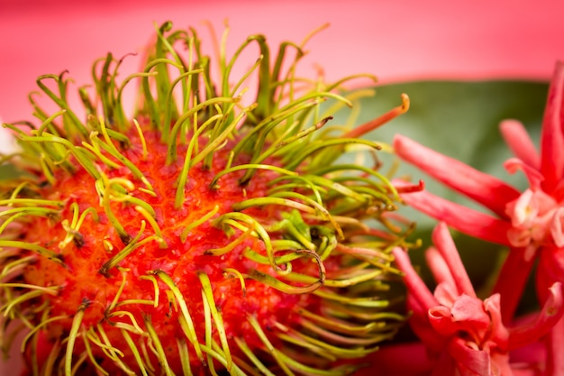 Плоды рамбутана по дереву, цвет розовый с цветком