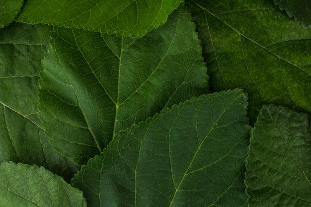 葉背景テクスチャクローズアップ植物