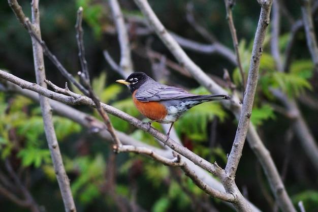 Маленькая птичка в природе.