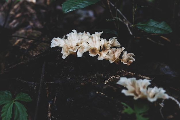 熱帯林の古い木の丸太に白いキノコ。