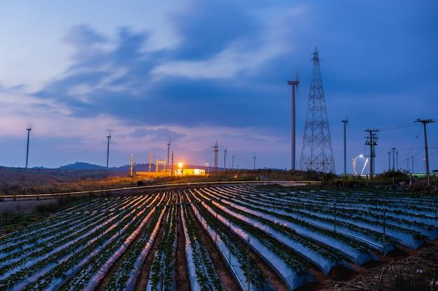 高電圧変電所と夕暮れ時のイチゴ畑の青い空と風車。