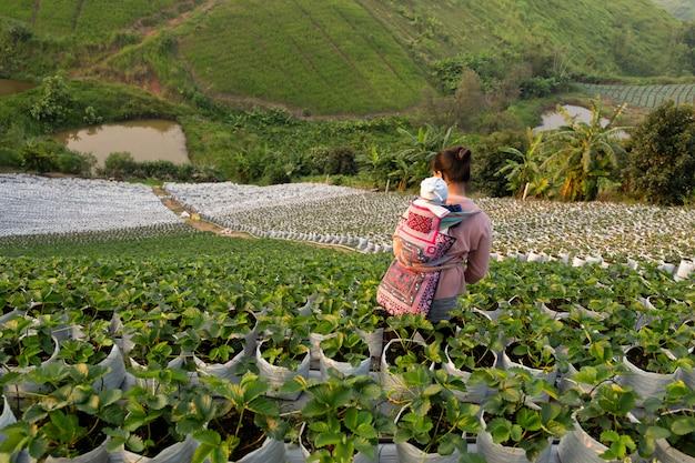 オーガニックの新鮮なイチゴ畑で背中に赤ちゃんを持つ丘の部族の女性。