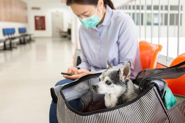 防護マスクを着ている女性とキャリーバッグのチワワ犬。
