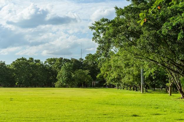 芝生と緑豊かな環境公園の風景