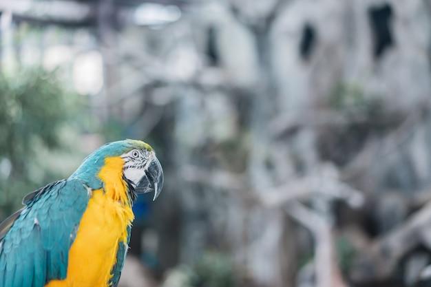 Красивый портрет попугая ары, птица в саде.