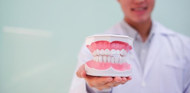 クローズアップ歯の義歯モデルは、クリニックで歯科医によって開催されました
