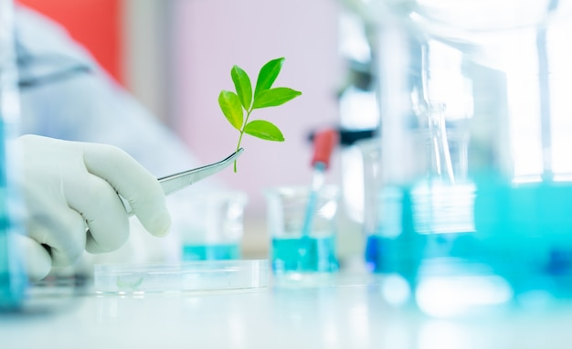 Крупным планом ученый с помощью щипцов, чтобы взять маленький завод из лотка для исследования биотехнологии в научной лаборатории