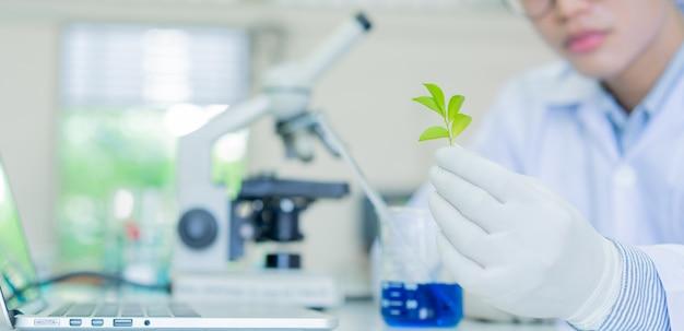 科学者はトレイから小さな植物を取り、科学実験室でバイオテクノロジーについて研究する