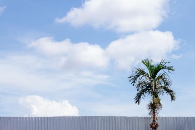 美しい雲の青空のヤシの木。