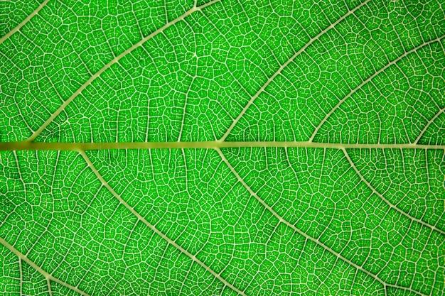 Текстура листьев.