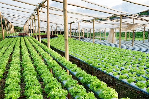 Изображение гидропоники овощеводческой фермы
