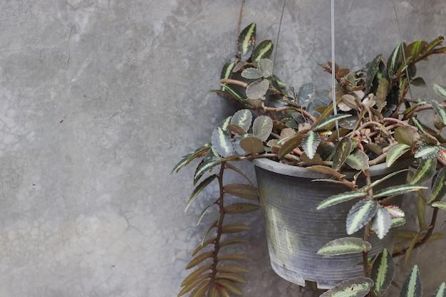 壁の背景を持つ鉢植えの植物