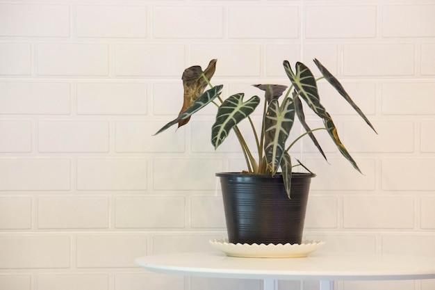 コーヒーショップの背景を持つ植木鉢