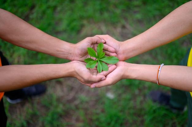 男性の手に緑の緑豊かな苗を置く