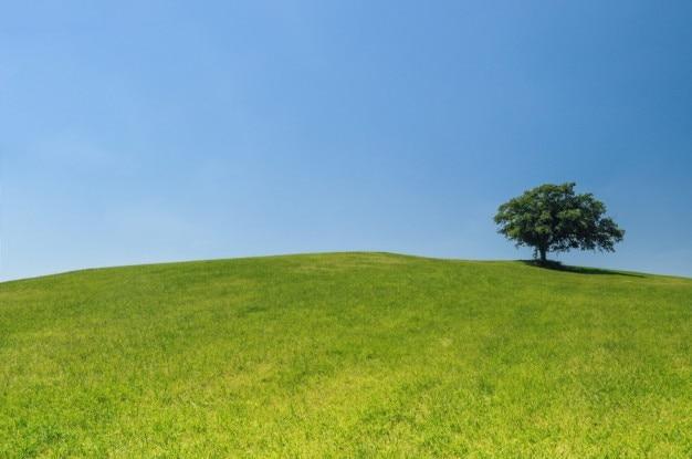 緑の丘の上の木