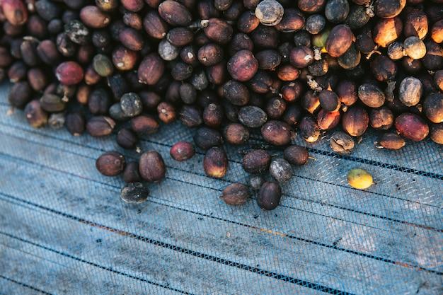 コピースペースを持つ青いネットで日干しアラビカコーヒー果実のトップビュー