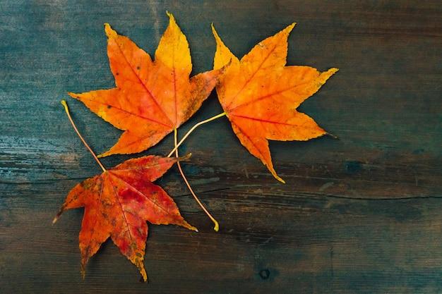コピースペースを持つ木製のテーブルの上の赤いカエデの葉の上から見る