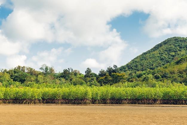 緑の山と干潮の風景