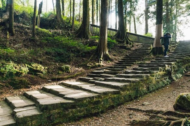 石の階段の上に立って、苔で杉の木の景色を撮影する観光客