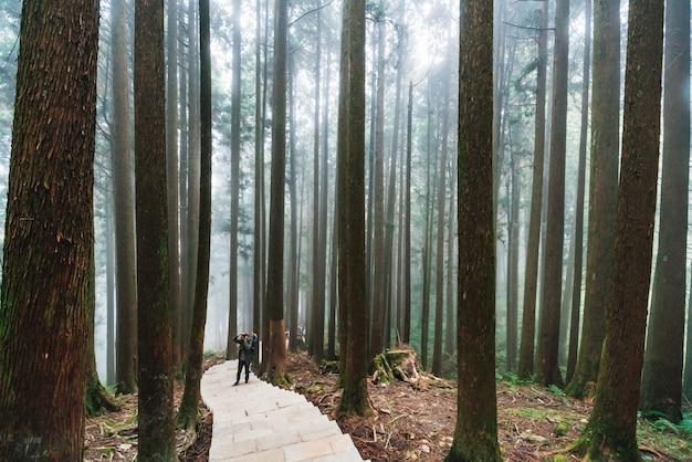 阿里山国家森林遊楽区の石段の上に立つ観光客と、森の霧のある木々を直射日光で。