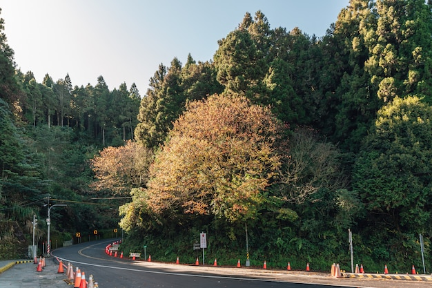 阿里山の朝の日差しと主要道路沿いの冬の森の風景。