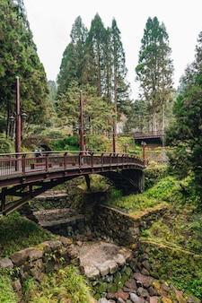 阿里山国家森林遊楽区の霧深いヒノキと杉の森と橋の風景。