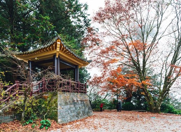 台湾の阿里山郷嘉義県にある阿里山国家森林遊楽区の背景にある木とカエデの木のある中国の望楼。