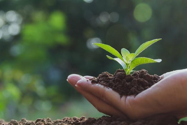 人間の手は緑の小さな植物の生活の概念を保持しています。エコロジーコンセプト。