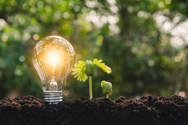 白熱電球と電球。電球と技術と創造性の概念