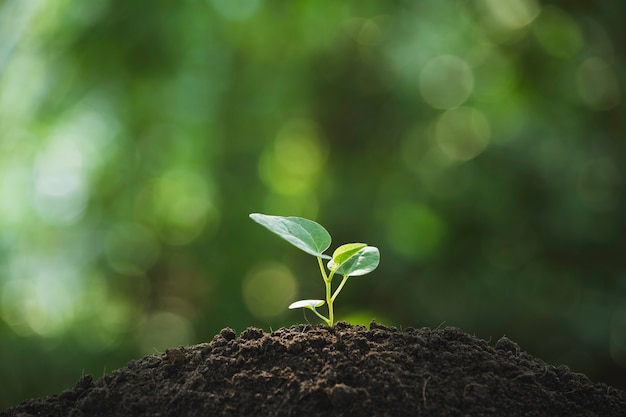 土壌とコピースペースで育つ苗と植物