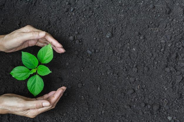 人間の手は生命と生態学の概念のための緑の小さな植物を保護します。