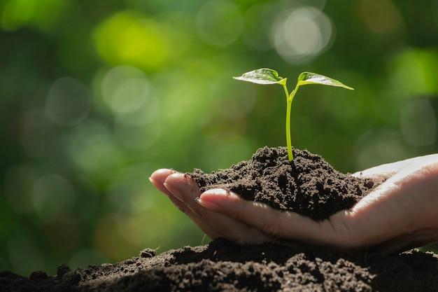 緑と小さな植物を持っている手。自然の背景に緑の新鮮な植物。