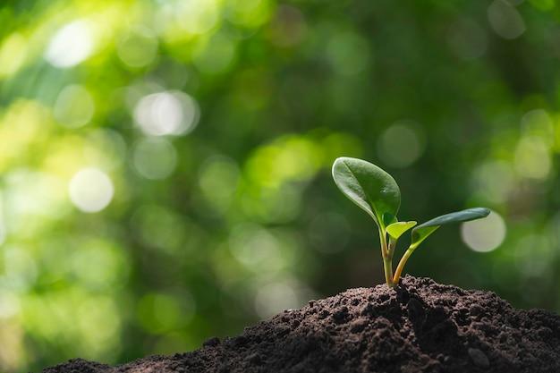 土壌で育つ苗と植物