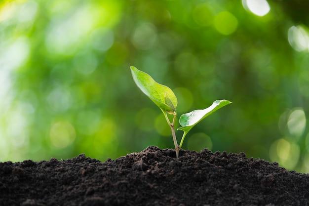 土の中で育つ苗と植物および挿入テキストのためのスペース