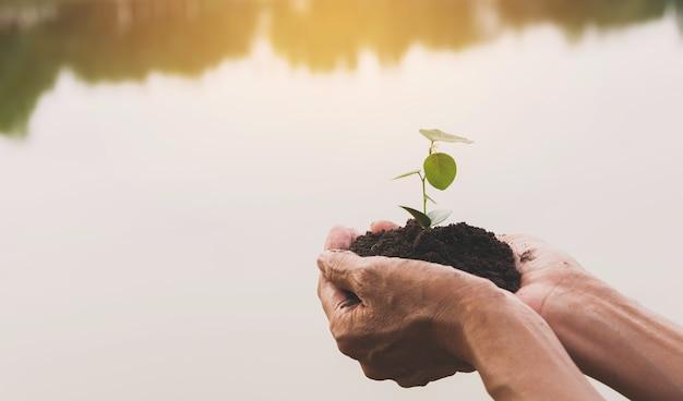 緑と小さな植物を持っている手。緑の新鮮な植物