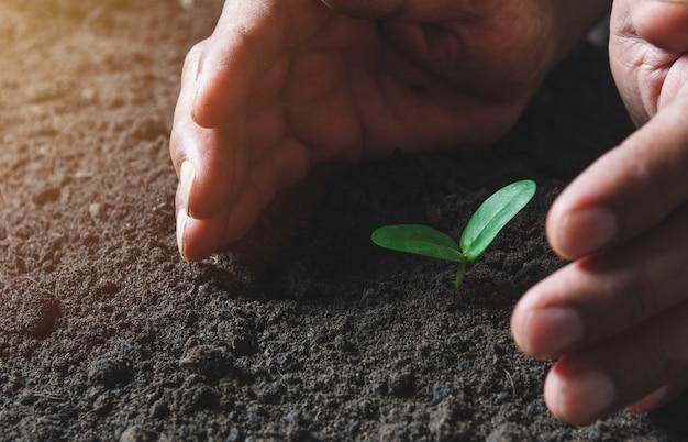 土で成長している緑の若い植物を保護する手