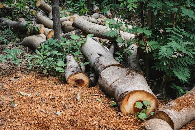 枯れ木は草の上の切り株です。木が公園で伐採された後、古い枯れ木が切り株です。