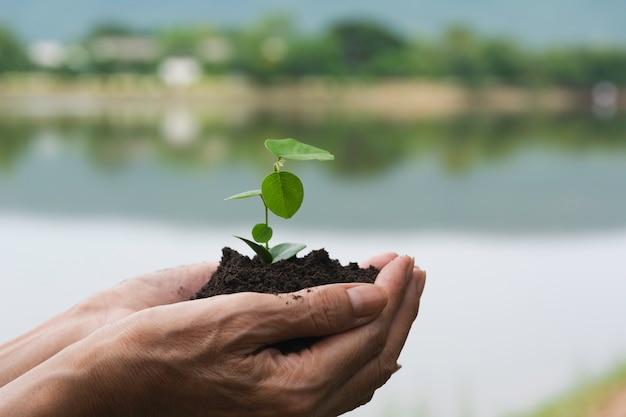 人間の手持ち株緑の小さな植物生活の概念。生態学のコンセプトです。