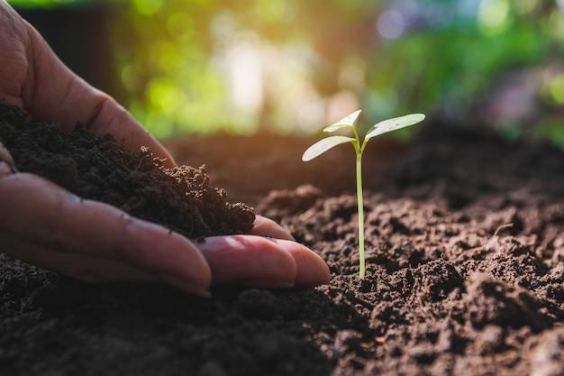 若い木と人間の手によって苗コンセプト