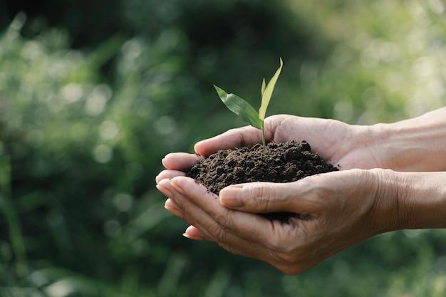 人間の手の生活と生態学の概念のための緑の小さな植物を保持