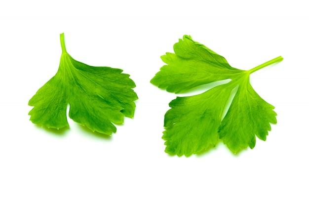 白で隔離される緑のセロリの葉
