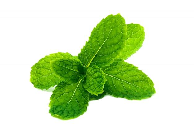 新鮮で緑のペパーミント、スペアミントの葉、白で隔離