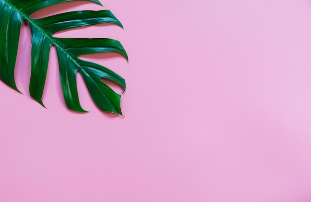 コピースペースとピンクの背景に分離された緑のサトウキビを残します。