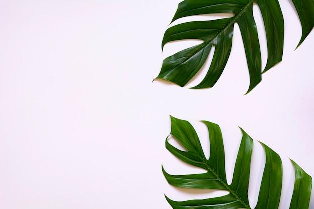 コピースペースで白い背景に分離された緑のサトウキビを残します。