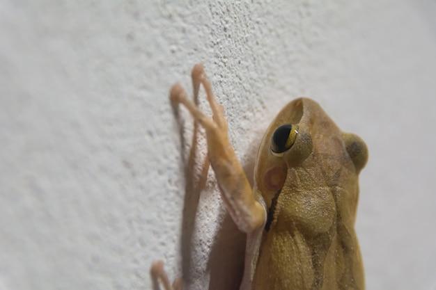 壁に黒い目の茶色のカエルと何かを探しています。